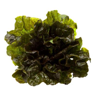 Bonipaks Red Leaf Lettuce