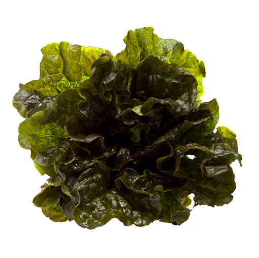 Bonipaks Red Leaf Lettuce